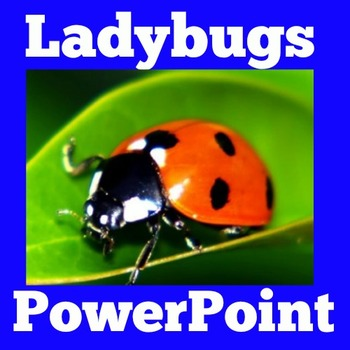 Ladybugs PowerPoint