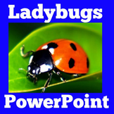 Ladybugs Science PowerPoint