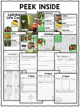 Ladybug Activities Nonfiction Unit