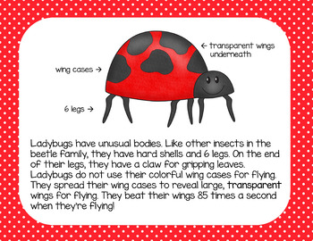 Ladybugs: A Nonfiction text, activities, and assessment