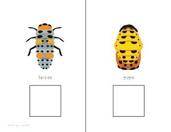 Ladybugs: An Interactive Comprehension Book