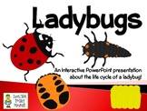 Ladybugs ~ An Interactive PowerPoint Presentation of their Life Cycle
