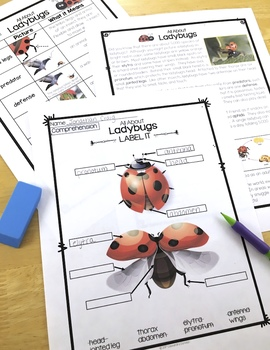 Ladybugs Differentiated Reading Passages with Vocabulary & Comprehension