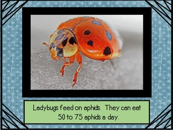 Love Those Ladybugs