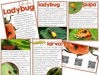 Ladybugs: Inquiry & Science Resources