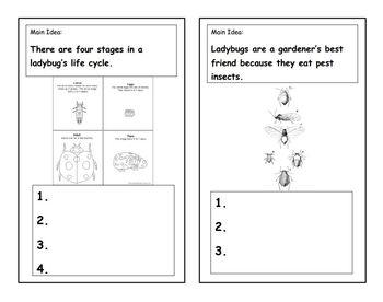 Ladybugs : Main Idea and Details