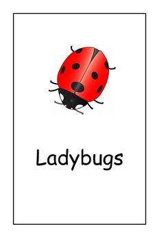 Ladybugs : Main Idea and Details