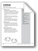 Ladybugs (Retell a Story Ending): Book Report Form