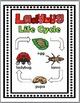 Ladybug Life Cycle Science and Literacy - Ladybug Unit - L