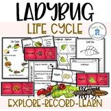 Ladybug Life Cycle Activities and Worksheets