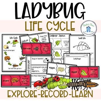 Ladybugs and Life Cycles K-2