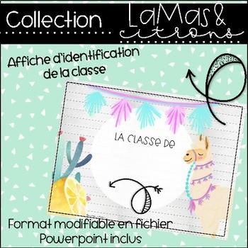 Lamas et citrons - Affiche d'identification de classe