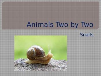 Land Snails and Aquatic Snails