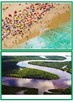 Land Water Air  picture cards