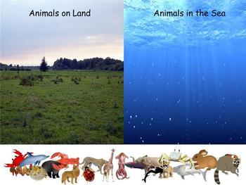 Land or Sea Mimio Activity
