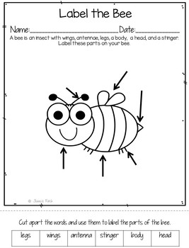"""Language Pack: """"Let's Go on a Bug Hunt!"""" for speech therapy"""