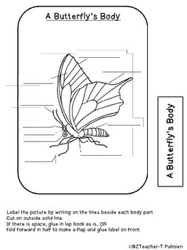 "Lap Book ""About Butterflies"" with Everything you need!"