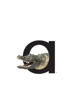 Large Letter and Sound Flashcards - Short Vowels with Photographic Style Images