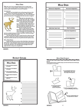 Large Mammals Interactive Notebook Unit – Behavioral and Structural Adaptations