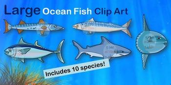 Large Ocean Fish Clip Art