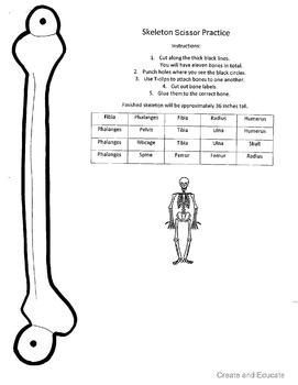 Large Skeleton Scissor Practice