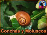 Las Conchas y Los Moluscos - Presentación en PowerPoint y Actividades