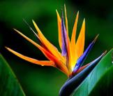 Las Plantas - Plants - Quiz