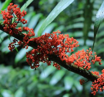 Las Plantas - Plants - Worksheet