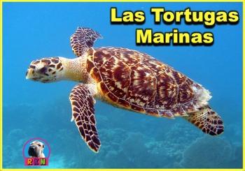 La Tortuga Marina - Presentación en PowerPoint y Actividades