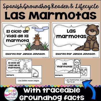 Las marmotas ~ El ciclo de vida ~ Spanish Groundhogs Reader & Lifecycle