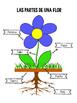 Las partes de una flor ~ Parts of a flower cut, paste and label activity