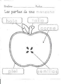 Las partes de una manzana