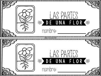 Las partes y necesidades de una flor (Parts and Needs of a Flower in Spanish)