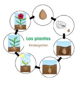 Las plantas - Spanish Science Unit Activites