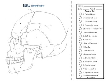 Lateral Skull Coloring