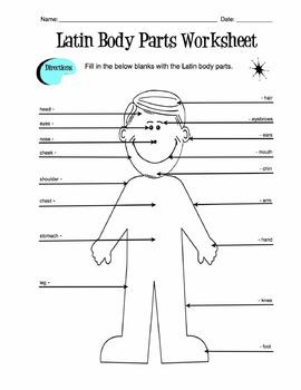 Latin Body Parts Label Worksheet & Answer Key