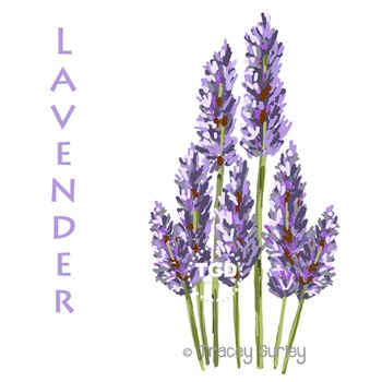 Lavender Flowers - lavender clip art Printable Tracey Gurley Designs