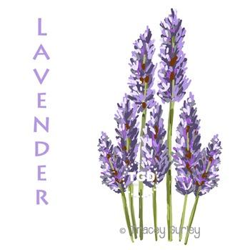 Lavender Flowers - lavender clip art Printable Tracey Gurl