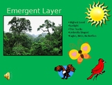 Layers of the Rain Forest PowerPoint Presentation