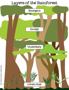 of the Rainforest Flip Book, Anchor Chart, Review Worksheet
