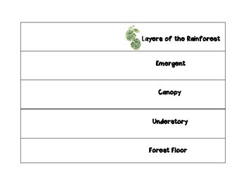Layers of the Rainforest Foldable - Emergent, Canopy, Understory, Forest Floor
