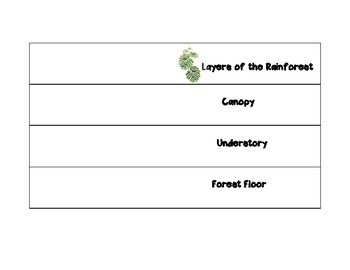 Layers of the Rainforest Foldable - Emergent, Canopy, Unde