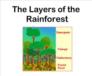 Layers of the Rainforest (Power Point Edition)