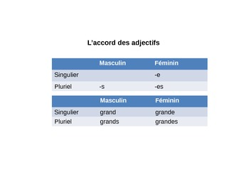 Le Visage The Face French Vocabulary and Adjective Agreement