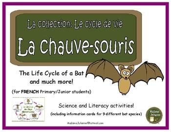 Le cycle de vie: La chauve-souris - French Bats (life cycle, literacy, science)