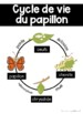Le cycle de vie d'un papillon