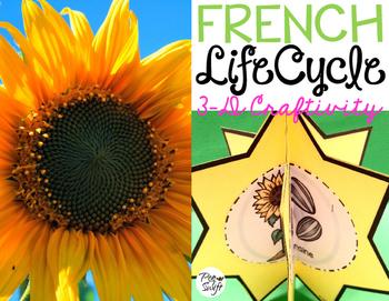 Le cycle de vie d'un tournesol - FRENCH Life Cycle Craft