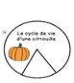 Le cycle de vie d'une citrouille - 12 pages Imprimables