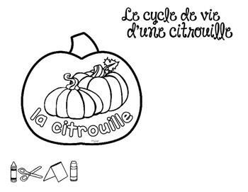 Le cycle de vie d'une citrouille - FRENCH Life Cycle Craft