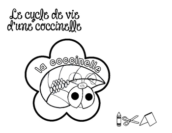 Le cycle de vie d'une coccinelle - FRENCH Life Cycle Craft
